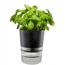 Vaso per le erbe BOTANICO